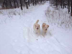 dogs on winter trail