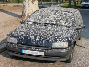 bombed car