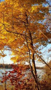 Fox fall colors