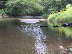 Ferson Creek