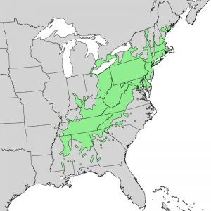 american chestnut range map
