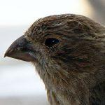 Bird_Beak