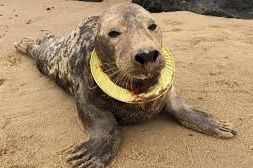 frisbee seal