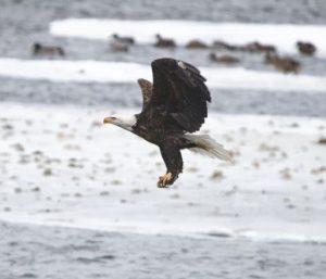 Brian-Butler-Eagle Ice