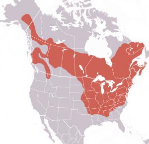 groundhog range map