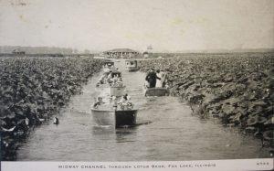 Fox Lake Lotus beds