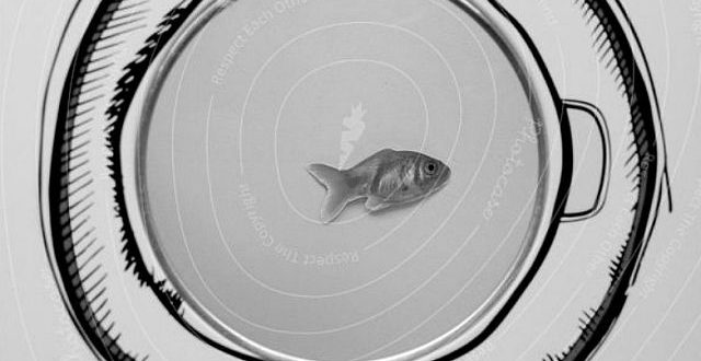 fish washing machine