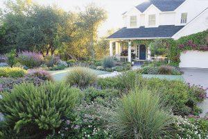 natural front yard