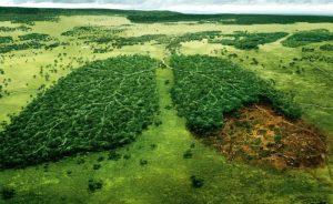 -ad for WWF by TBWA PARIS France via brett jordan on Flickr CC BY